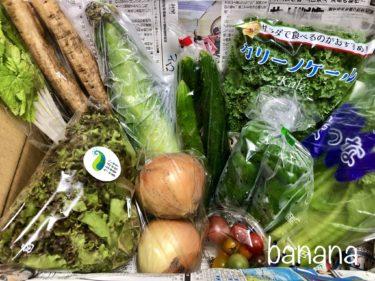 【北上市】ふるさと納税返礼品が届きました!新鮮な野菜が10種類も詰まってとってもお得。